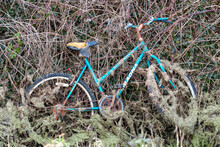 A Girls Lost And Abandoned Bike In Ditch, Covered In Weed.