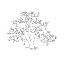 Big Drought Tree, Hand Drawn. Suitable For Coloring Books For Children.