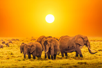 Artistic fantastic african sunset landscape. African elephants in Serengeti National Park. Tanzania, Africa at a sunset.