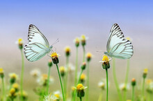 The Beautiful Two Butterflies Sitting In The Flowers