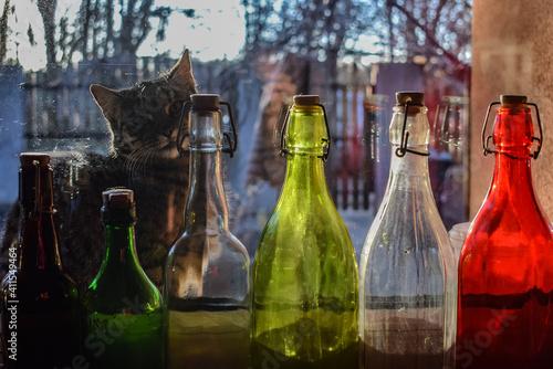 Fototapeta Close-up Of Wine Bottles And  Cat obraz