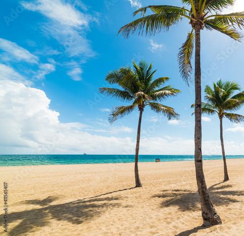 Fototapeta Palm Trees On Beach Against Sky obraz