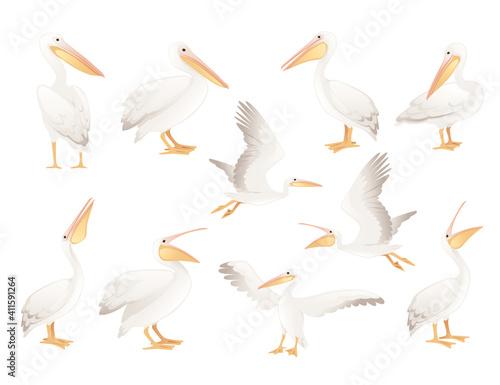Obraz na płótnie Pelican genus large water bird cartoon animal design big white bird with orange