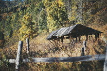 An Autumn Mountain Landscape With An Old Desolate Wooden Shelter Or A Stable With A Triangle Roof And A Dilapidated Fence In The Foreground, Yellowed Meadow Grass, And Birches, Hillside Aloof