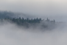 Panoramic Shot Of Trees Against Sky During Foggy Weather