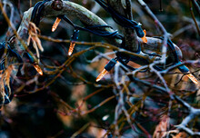 Close-up Of Illuminated String Light On Bare Tree