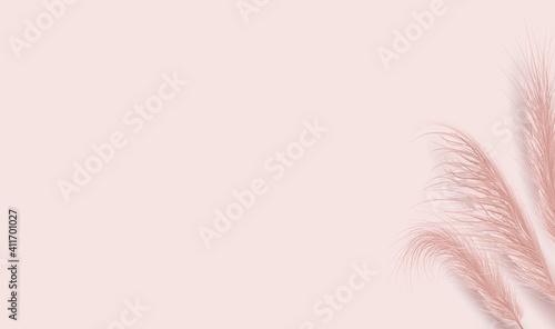 Fotografía Dried natural pampas grass on pink background