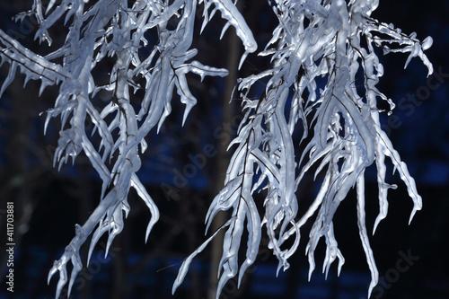 氷に閉じ込められた樹木 Fototapete