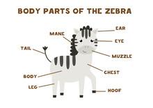 Body Parts Of The Zebra. Scheme For Children.