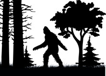 Big Foot. A Symbol Of Mystery And The Unknown.
