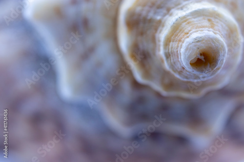 Photo sea ​​shell and golden ratio in nature, abstract photograph produced with macro shooting techniques