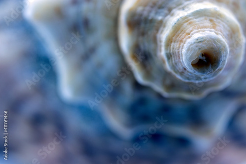 Fotografie, Obraz sea shell and golden ratio in nature, abstract photograph produced with macro shooting techniques