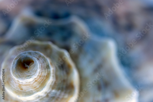 sea ​​shell and golden ratio in nature, abstract photograph produced with macro shooting techniques Wallpaper Mural