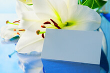 Spring Background. Lily Flower, Lilium Navona, With White Blank Card, Spring Background