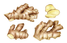 Watercolor Ginger Root With Slices Set. Hand Drawn Ginger Rhizome Cross Section Illustration Isolated On White Background. Spice Plant, Organic Ingredient, Medicinal Herb For Package, Decoration