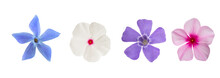 Periwinkle Flowers Mix
