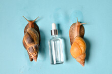 Cosmetic Serum With Extract Of Snail Slime And A Snails On A Wood. Snail Mucus Extract.