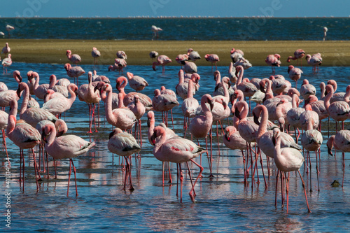 Tablou Canvas Flamingo colony in Walvis Bay in Namibia