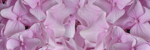 Pale Pink Lilac Petals Close Up, Shallow Depth Of Field, Banner Concept