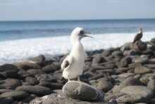 Seagull On Rock At Beach