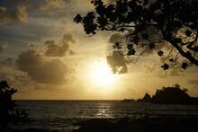 Monkeypod Aka Rain Tree And Sea With Beautiful Sunlight At Dawn In Maui, Hawaii - モンキーポッド マウイ 海 朝日 ハワイ