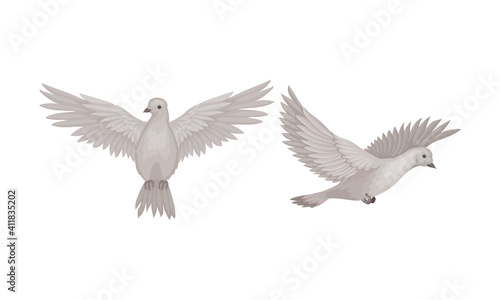 Carta da parati White Domestic Pigeon or Dove as Feathered Bird Vector Set