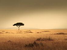 Lonley Tree On Field Against Clear Sky
