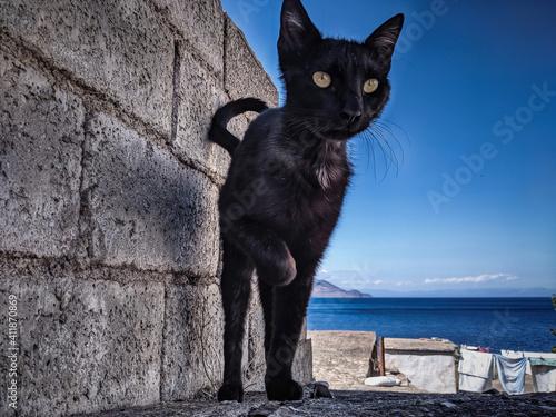 Fototapeta Portrait Of A Cat On Wall