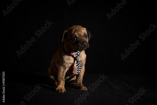Canvas Print Puppy Photo Shoot - Black Background
