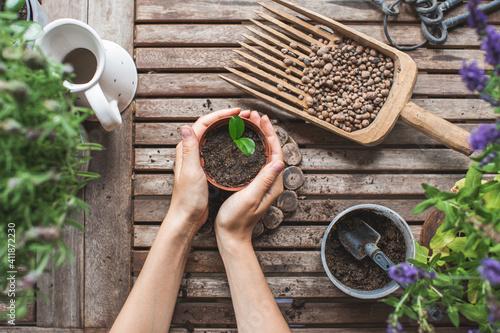 Fotografia gardeners hands transplanting small citrus plant in plastic pots on wooden table