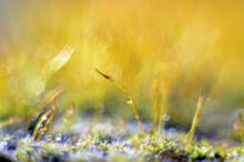 Amazing Colorfull Moss Macro
