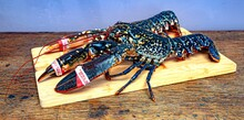 Fresh Caught  Lobster On  Wooden Board