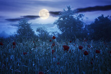 Red Poppy Field In The Mist At Night. Beautiful Rural Landscape In Summer Full Moon Light. Mysterious Atmosphere. Trees In The Distant Fog