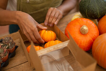Female Shop Owner Arranging Small Pumpkins In Box