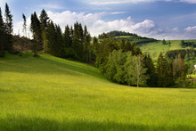 Green Meadow And Mountain Forest In Background.High Quality Photo