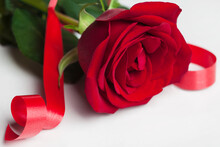 The Scarlet Rose Is Lying  On A White Background. Nearby Is A Red Ribbon. Close Up