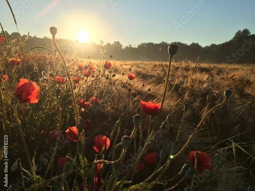 Fototapeta Scenic View Of Poppy Field Against Sky obraz na płótnie