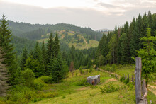 The Horse Grazes Next To A Wooden Nut. Green Nature Rural Landscape