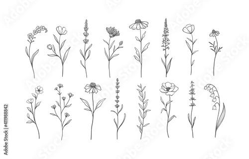 Fototapeta Set of Herbs and Wild Flowers. Hand drawn floral elements. Vector illustration obraz