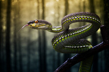 Coiled Viper Snake On A Branch In The Jungle, Sumatra, Indonesia