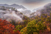 Mountain And Autumn Forest Landscape In The Mist, Yamanashi, Japan
