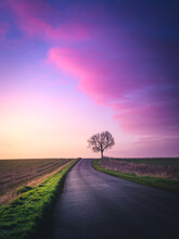 Lone Tree By A Road Through Rural Landscape, Warwickshire, England, UK