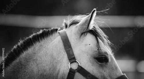 Photo The ear, the mane and the horse's eye close up.