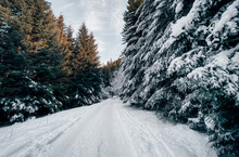 Winter Road Through Treelined Snowy Landscape, Bulgaria