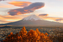 Mount Fuji At Sunset With A Maple Tree In Foreground, Honshu, Japan