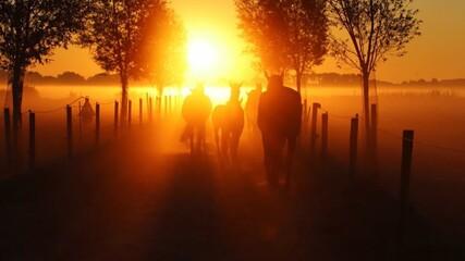 Silhouette Horses Walking On Field Against Orange Sky During Sunset
