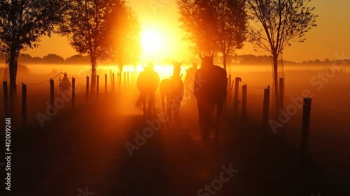 Fototapeta Silhouette Horses Walking On Field Against Orange Sky During Sunset obraz