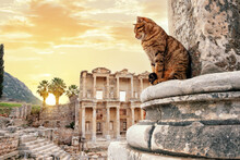 The Cat Sits Near Column In Background Of Library Of Celsus In Ephesus