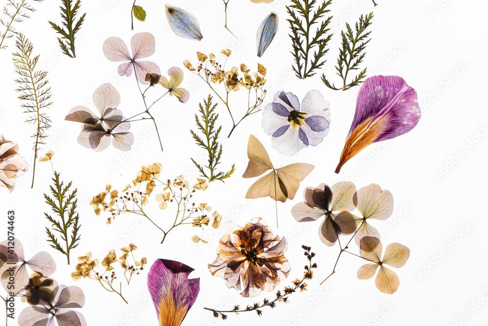 Fototapeta dry flowers on the white background