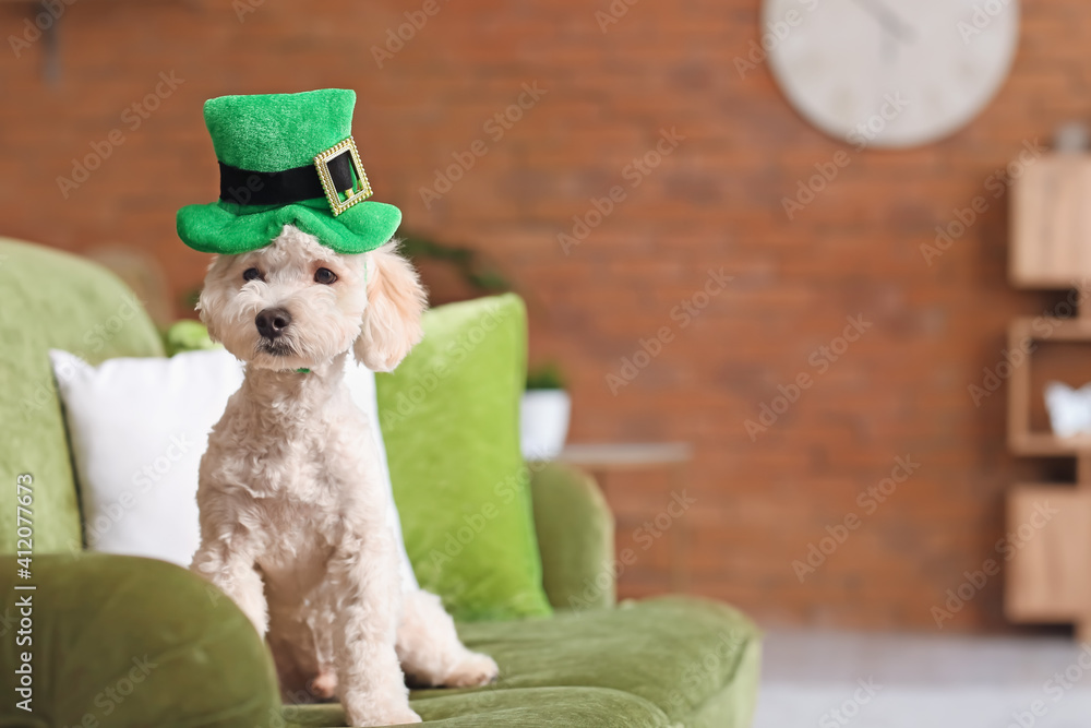 Fototapeta Cute dog with green hat at home. St. Patrick's Day celebration